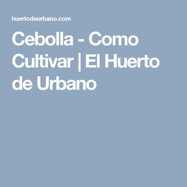 Cebolla - Como Cultivar | El Huerto de Urbano