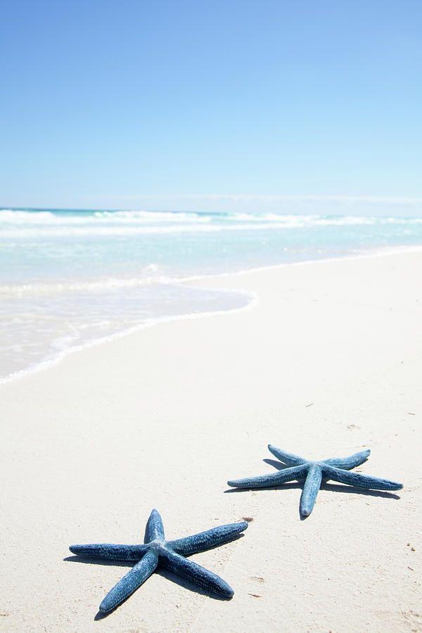 ☼ ☀ ร๏๏tђ ๓ץ ร๏ยl ☀ ☼ Beach starfish picture #beach #starfish