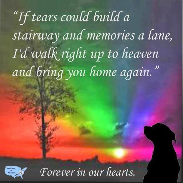 Sighting Only Is This Your Dog Duluth Husky Male Fans Even Though This Dog Has Crossed The Rainbow Bridge Please Share Losing A Dog Dog Ages Rainbow Bridge