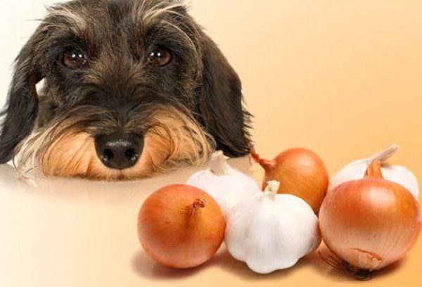 7 alimenti umani che sono tossici per i cani