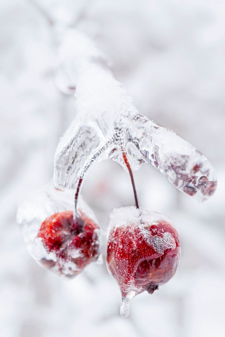 213 best winter flowers images on pinterest winter flowers
