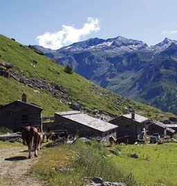 Valle d'Aosta - Alpage Arp Vieille -Valgrisenche - a 2300 m s.l.m. si trova ai piedi del monte Arp e a 2 h dal rifugio degli Angeli ai piedi del ghiacciaio del Rutor. - Percorso: dalla frazione Bonne di Valgrisenche, costeggiare il lago di Beauregard, sino al bivio per l'alpeggio e il Rifugio degli Angeli. Percorrere la strada poderale o il sentiero segnalato sino all'alpeggio.