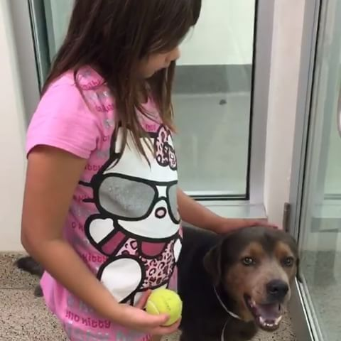 ***Urgent Dogs of Miami 1/11/17  LAST CALL BUSTER GOOD WITH KIDS TOO💔🙏🏼💖 Buster was given a last chance to be saved TODAY🚨. Watch this #VIDEO  of 1 year old baby BUSTER who is LAST CALL💔at the shelter and DIES AT 6:30PM TODAY😞💔 BUSTER #A1821831  was dumped by his family and now the shelter has given him until 6:30pm TODAY for someone to come save his life because he has to be the ONLY DOGGIE in the household (Cannot be around other dogs). He does not deserve to die only because of…