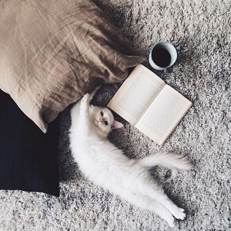 последнее время картинки доброе утро с черной кошкой вам целый список