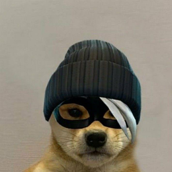 Perrito Con Skin De Fortnite Memes Perros Fotos De Perros Perros Disfrazados