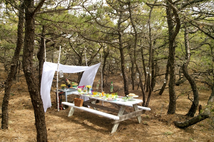 Woodland picnic in early spring, Cape Cod Seashore