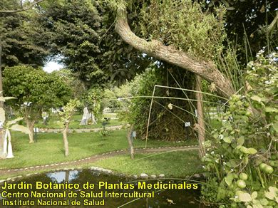 23 best jardines bot nicos images on pinterest botanical gardens lima and madrid. Black Bedroom Furniture Sets. Home Design Ideas