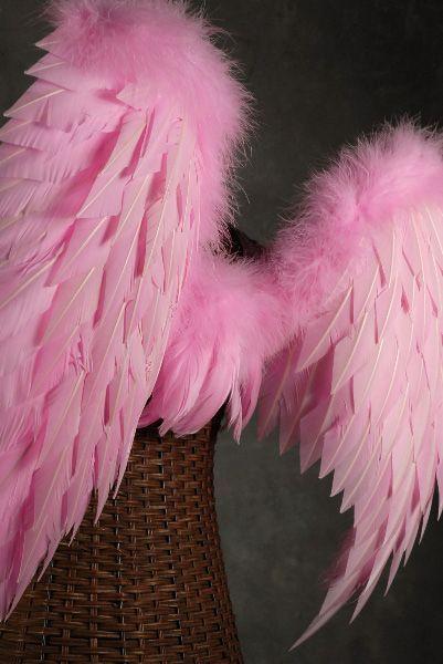 Pink Wings....