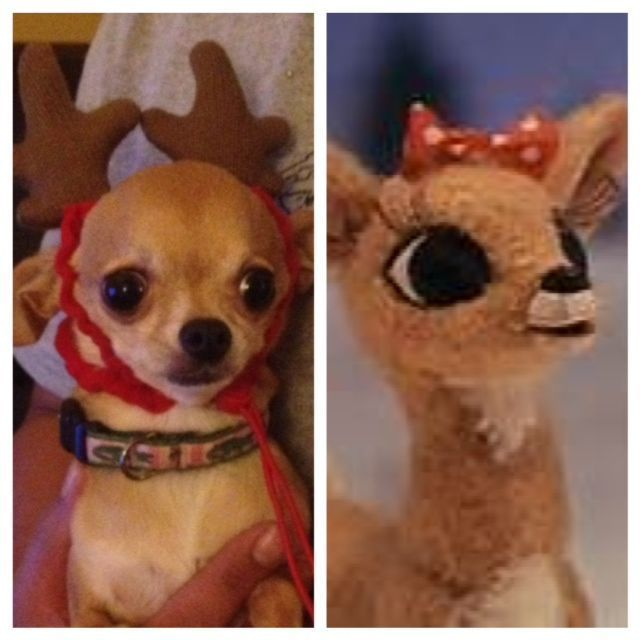 Clarice from Rudolph the Red Nosed Reindeer! :)