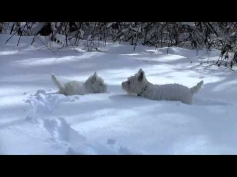 """Then they come in with their leg """"feathers"""" just loaded with snowballs...."""