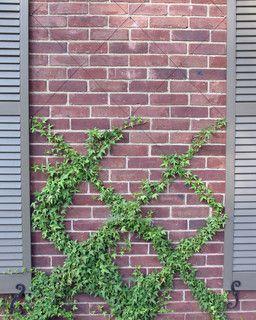 wall trellis ... wire pattern