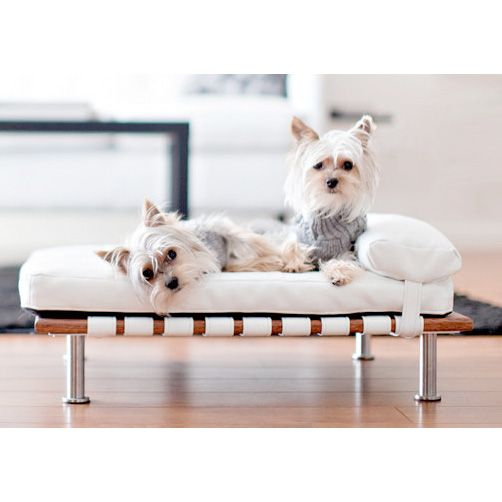 Elegant Ivy Modern Small Dog Day Bed - Designer Dog Beds for Small Dogs