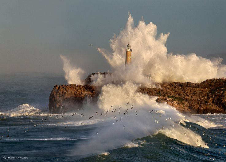Seagulls in the lighthouse Mouro Island, in Santander, Cantabria