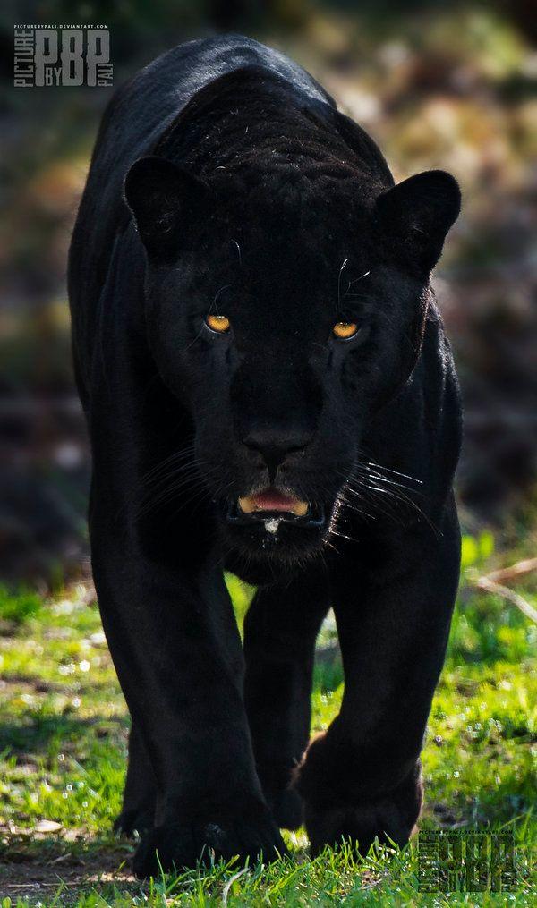 King of the Amazon's