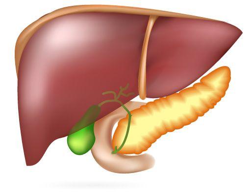 8 Conselhos rápidos para um fígado mais saudável O fígado é um dos órgãos mais importantes e maiores do corpo humano. Ele desempenha um papel essencial na metabolização de nutrientes assim como na ...