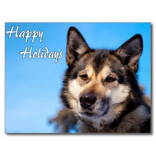Wolf Happy Holidays.jpg Postcard