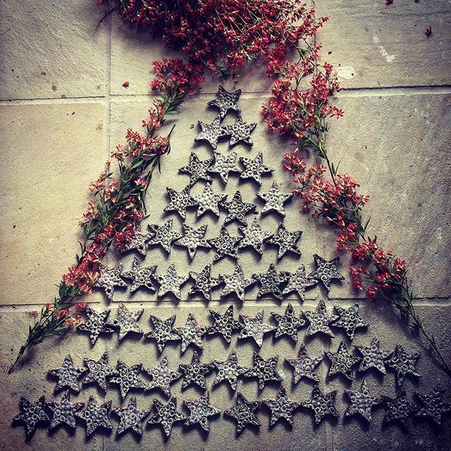 Christmas 🎄 Bush & ⭐️ Stars..