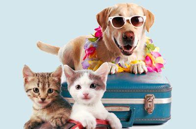 Bio Bloggando: Come viaggiare con cani e gatti: i consigli utili ...