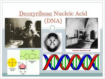This is a introductory power point into DNA It goes over DNA's history, scientists involved and it's basic structure nucleotides and importance of hydrogen bonding.