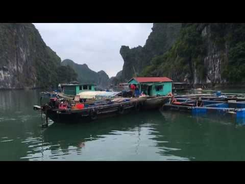 A visit to a floating fish farm on Cat Ba archipelago in Northern Vietnam.