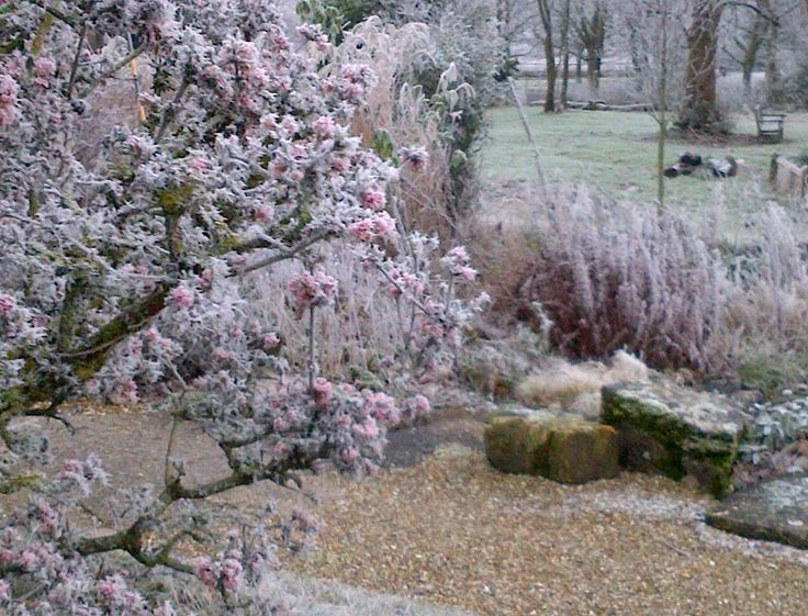 best 25 viburnum bodnantense ideas on pinterest petit jardin l 39 inglaise fronti re. Black Bedroom Furniture Sets. Home Design Ideas