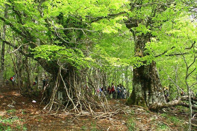 social trekking in Pollino Italy