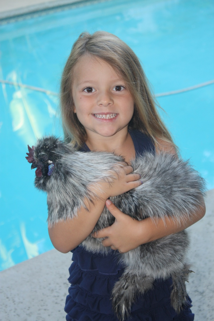 73 best chickens as pets images on pinterest backyard chickens