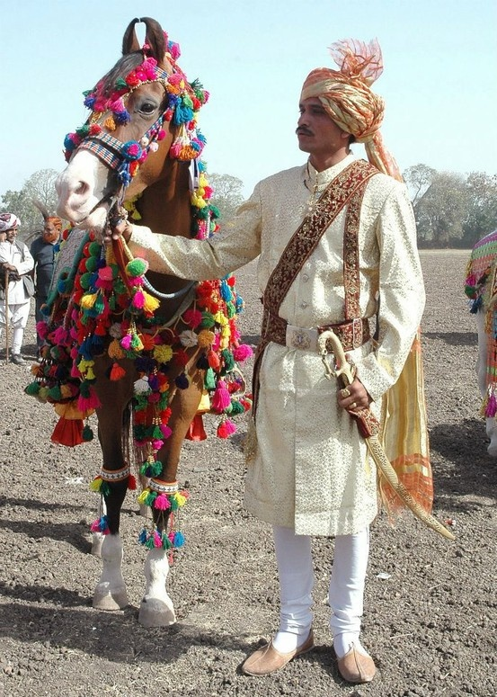 Traditional Indian wedding costume on a Marwari horse and groom.