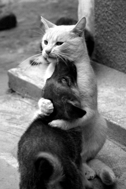 Gatinho abraçando um doguinho