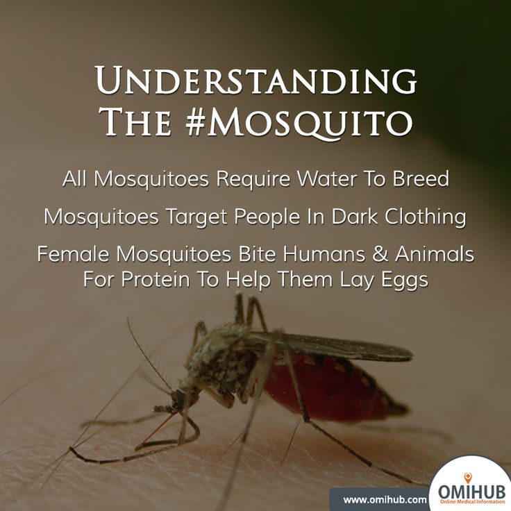 Understanding the #mosquito will help us prevent its spread.  #Stop #Malaria #MosquitoMenace #DengueOutbreak  For the right medical help visit: http://www.omihub.com/