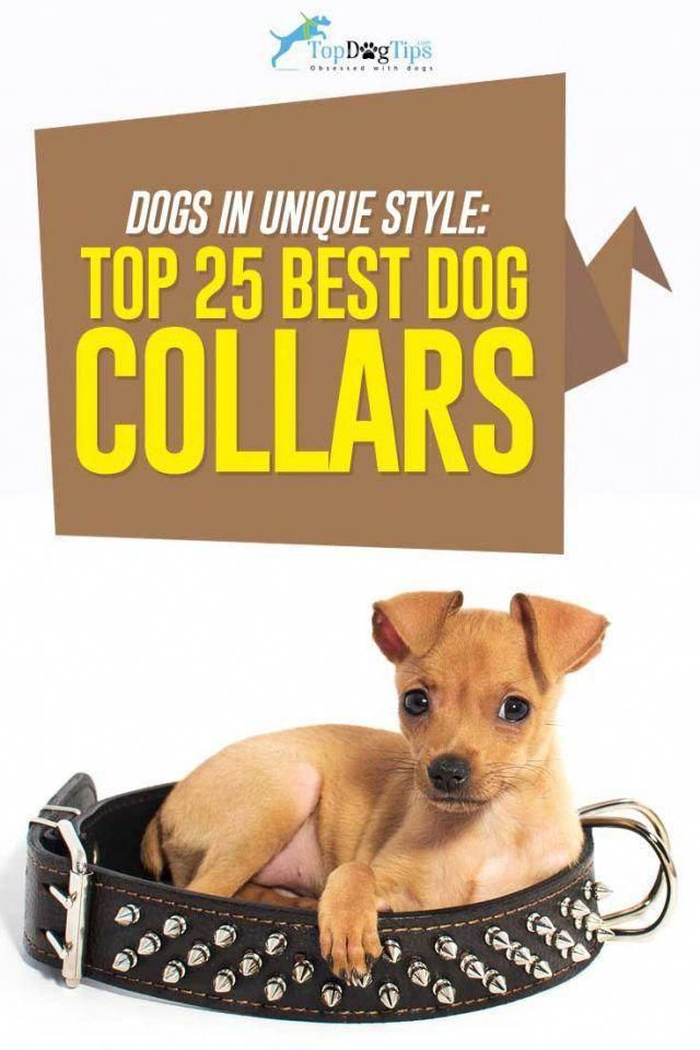 Read More About Best Dog Training Tricks Give Your Dog Rawhide