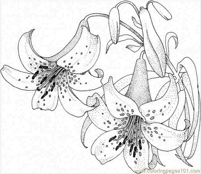Lily 5 Tons Of Flower Coloring Sheets