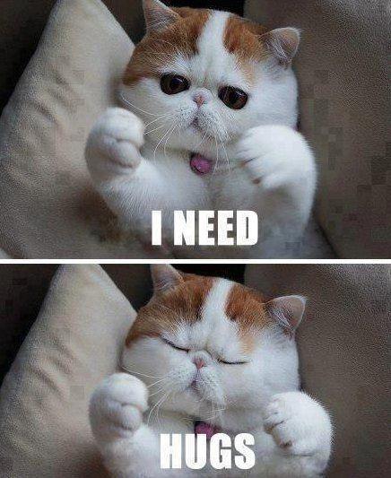cutest cat in the world! Kayla's animals Pinterest
