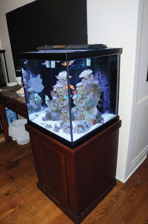 471 best images about reef aquariums on pinterest for Small saltwater fish tank