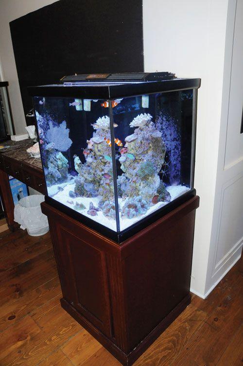 471 Best Images About Reef Aquariums On Pinterest