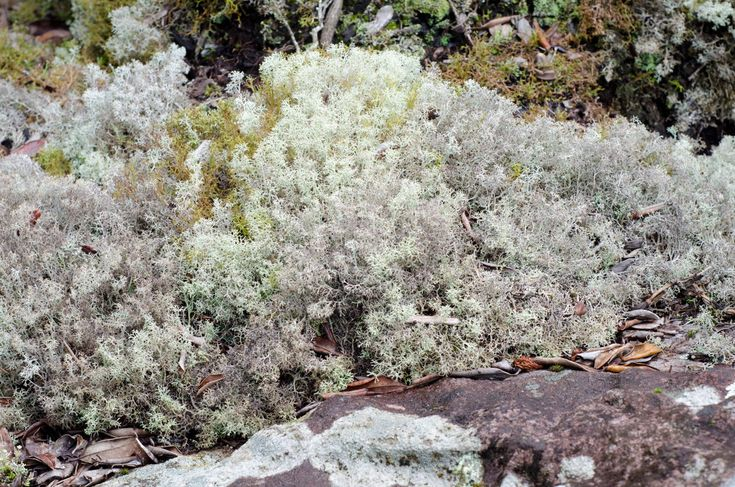Tundra Biome Interesting Info About its Plants and