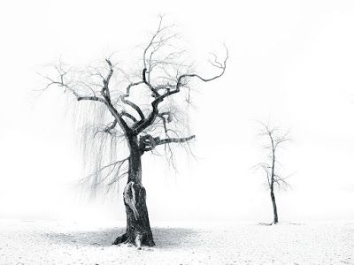 Κόλλα λευκή: Δέντρα