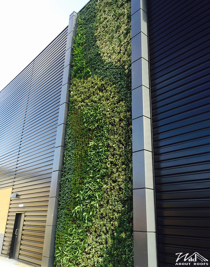 Living Wall Wild About Roofs 36