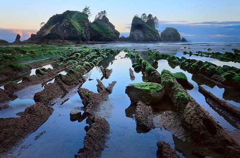 I've never actually seen this in person. On my list of next years Olympic Rainforest Trip, Shi Shi Beach, Washington State.