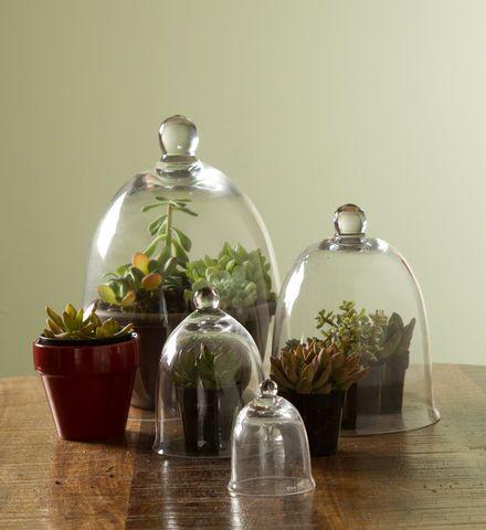 25 best ideas about garden cloche on pinterest may 24 for Garden cloche designs