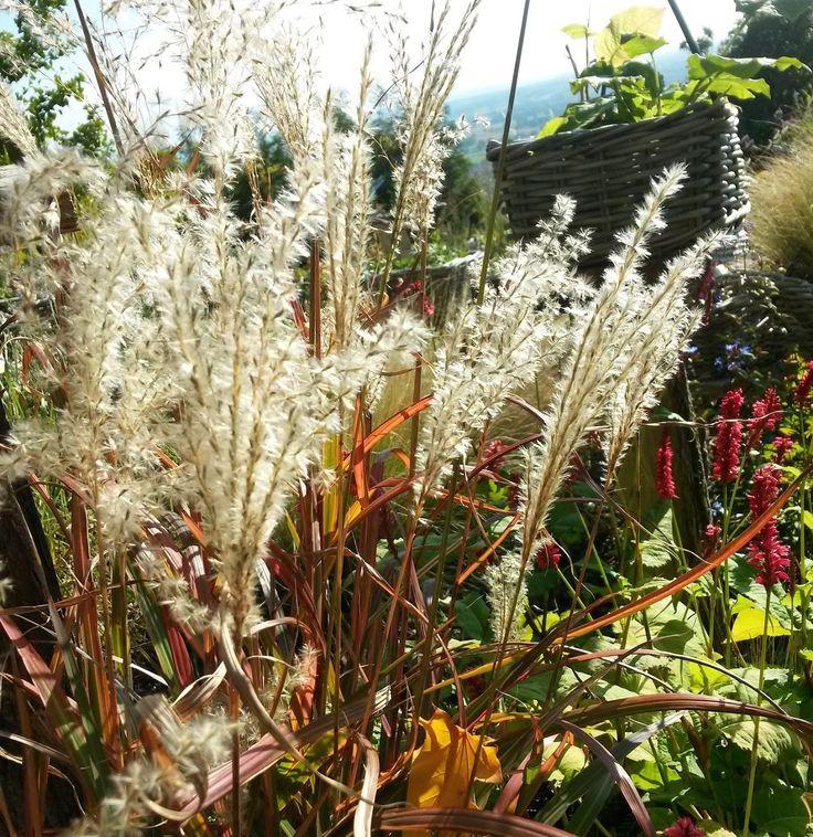 pépinière-auvergne-vichy-plantes-vivaces