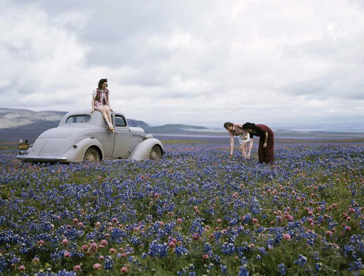 Wildflowers on Route 99, San Joaquin Valley, California, c. 1941  Christie's Boundless: 125 Years of National Geographic Photography www.christies.com/natgeo Estimates starting at $400