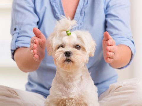 Reiki animal healing: How to treat animals and pets; Reiki treatment for animals, Reiki for dogs, cats,  domestic and other small animals