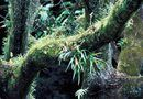 How Fast Do Staghorn Ferns Grow During the Summer?