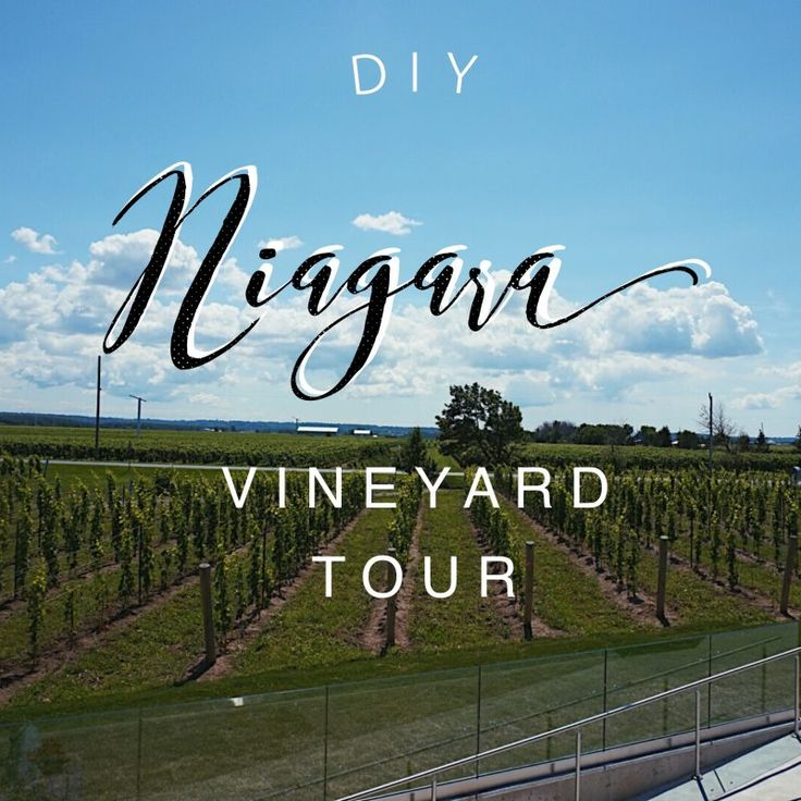 DIY Niagara Vineyard Tour – The Impressionist's Silhouette Blog