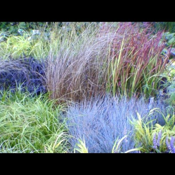 Ornamental grasses in the garden by waterfieldfox2 351 for Different ornamental grasses