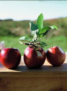 Barefoot Contessa - Recipes - Homemade Applesauce
