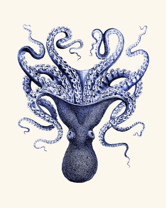 Octopus print Blue 3, octopus picture nautical print beach house decor wall art print poster digital giclee Nautical Decor on Etsy, $15.00