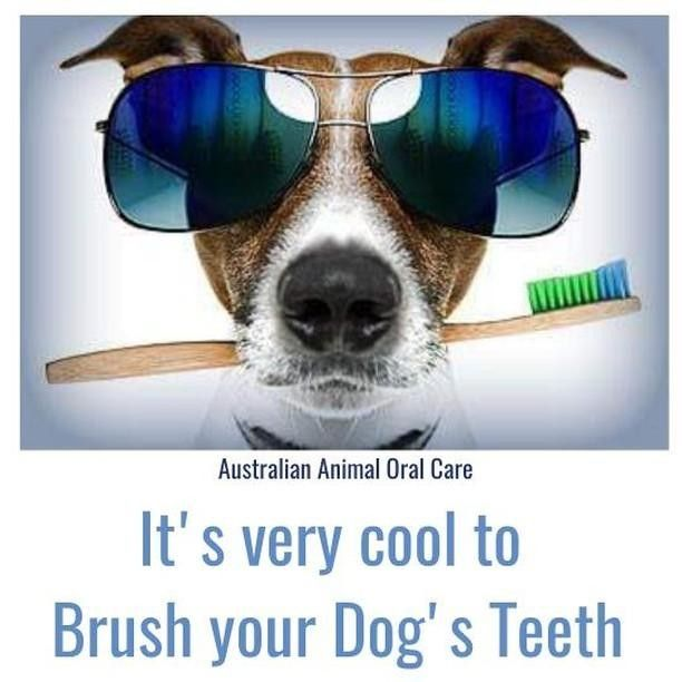 Brush Your Dog S Teeth In 2020 Dog Teeth Dog Teeth Cleaning Australian Animals