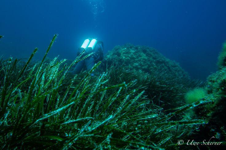 www.bioConsult-svi.de; Research Diver exploring Posidonia areas; Ibiza, Isla Conejera, Spain; www.bioConsult-svi.de